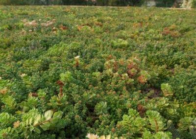 Tetto-verde-Biondani